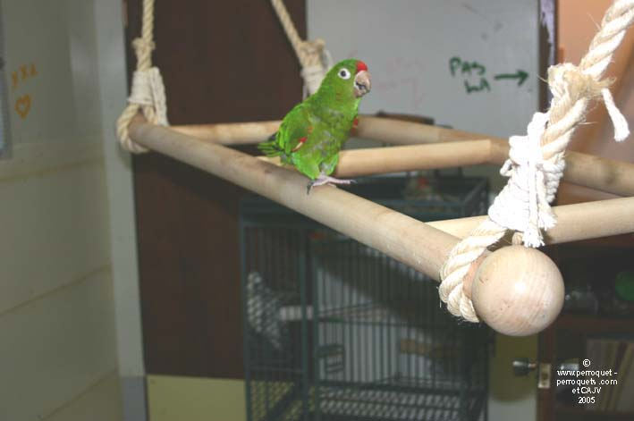Parrots prefer wood among most of the materials available to make toys for them.