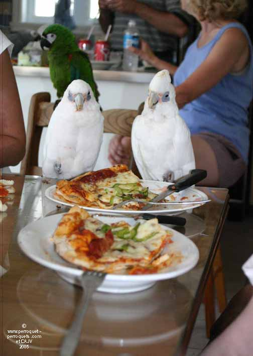 Parrots and pizza= nice treat