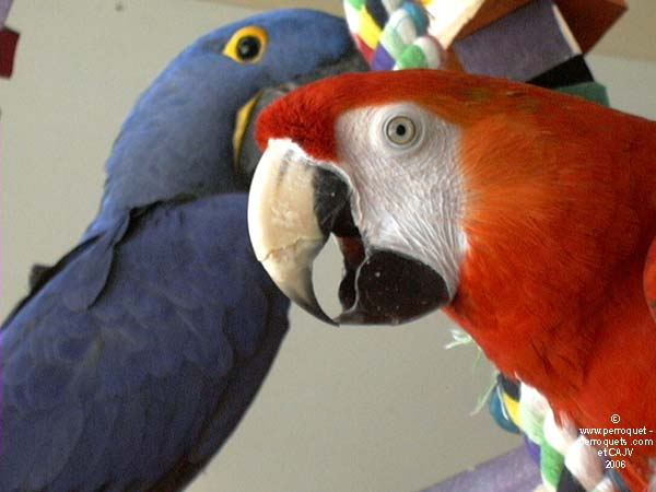 Your parrot will love to have a companion with whom spend the day.